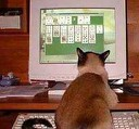 solitaire cat
