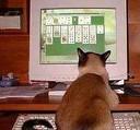 solitaire cat